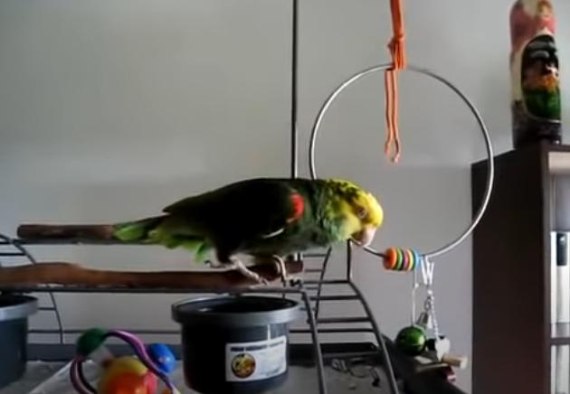 Βίντεο: Παπαγάλος… κλαίει σαν μωρό και γίνεται viral!