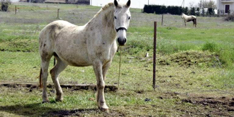 Σοκ: Πυροβόλησαν με κυνηγετικό όπλο 3 άλογα σε κτήμα στα Γιάννενα