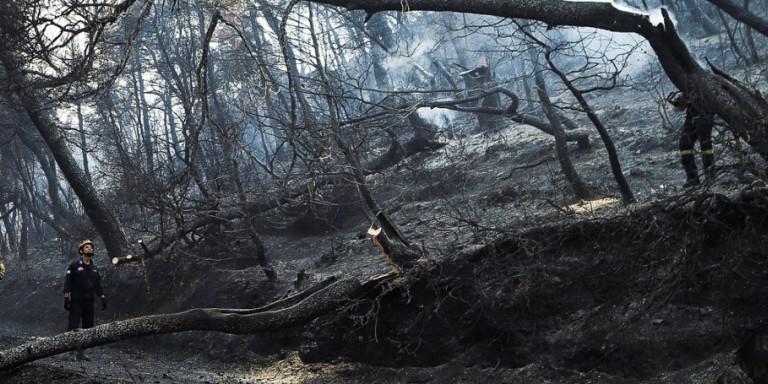 Τεράστια καταστροφή από τη φωτιά στην Εύβοια -Τουλάχιστον 25.000 στρέμματα η καμένη έκταση! (BINTEO)