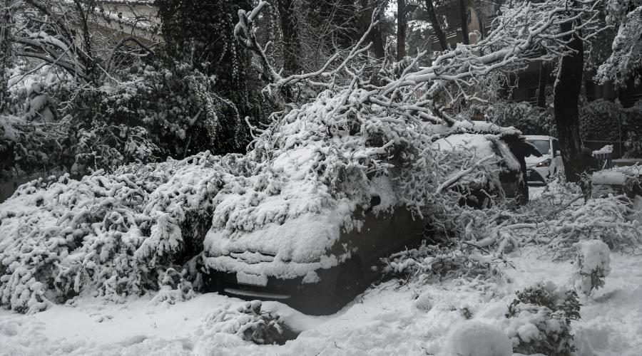 Πτώση δέντρου σε αυτοκίνητο: Τι πρέπει να κάνουν οι ιδιοκτήτες για να αποζημιωθούν