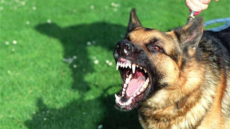 Φρίκη στα Πατήσια: Ηλικιωμένη πέθανε και την έφαγαν τα σκυλιά της!