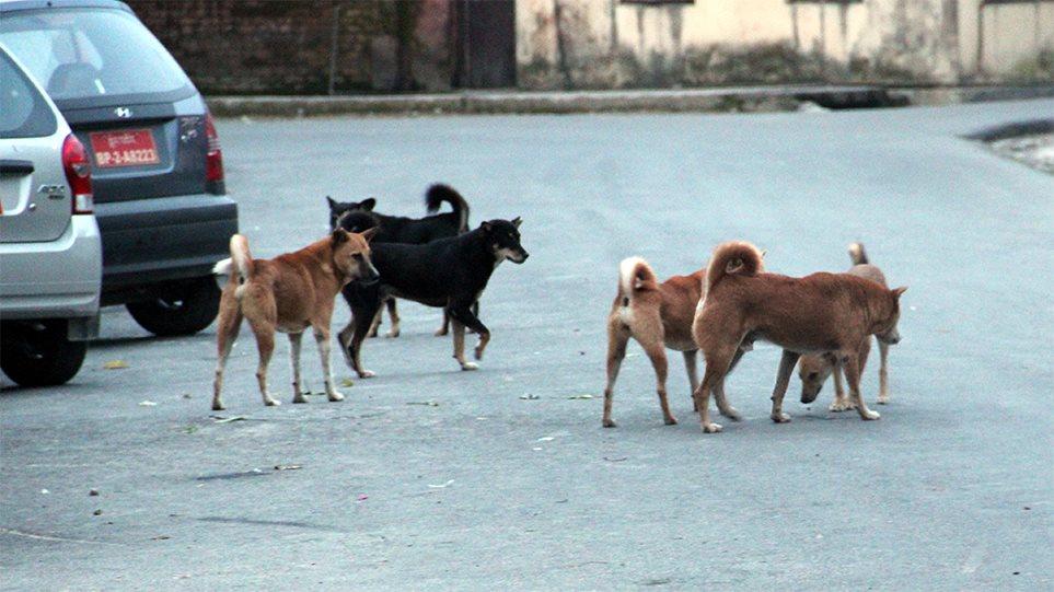 ΣΟΚΑΡΙΣΤΙΚΟ ΠΕΡΙΣΤΑΤΙΚΟ! Επίθεση «αγέλης» σκύλων στον Διόνυσο: Δυο σοβαρά τραυματίες!