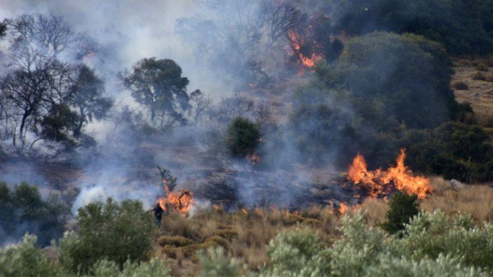 Μαίνεται η φωτιά στη Θήβα – Κινείται με μεγάλη ταχύτητα προς τoν Κορινθιακό!