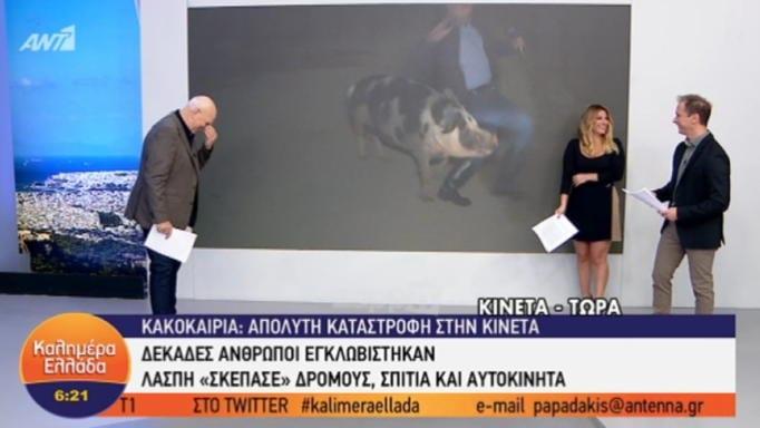 Ούρλιαζε στον αέρα! Θηλυκό γουρούνι κυνηγά τον ρεπόρτερ του Παπαδάκη στον αέρα! Τον δάγκωσε στον… (ΒΙΝΤΕΟ)