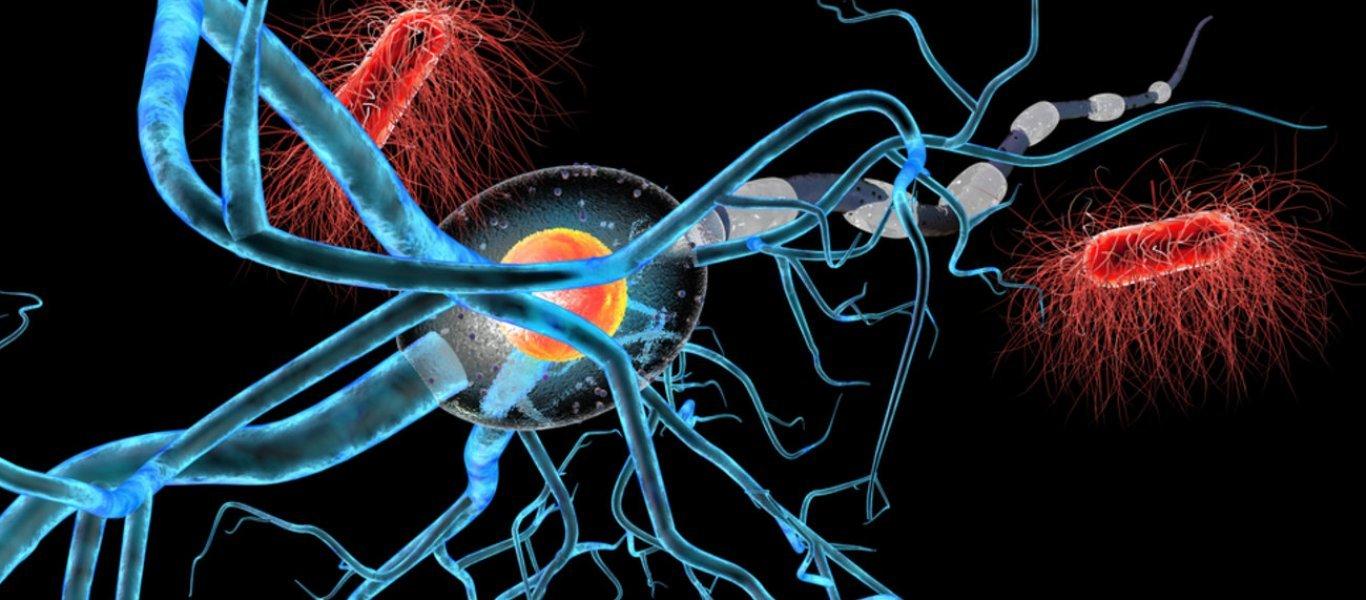 Bρέθηκε η θεραπεία όλων των καρκίνων; – «Ανακαλύφθηκε τυχαία» – Θα δοκιμαστεί εντός το 2020 – Τι λένε οι επιστήμονες!