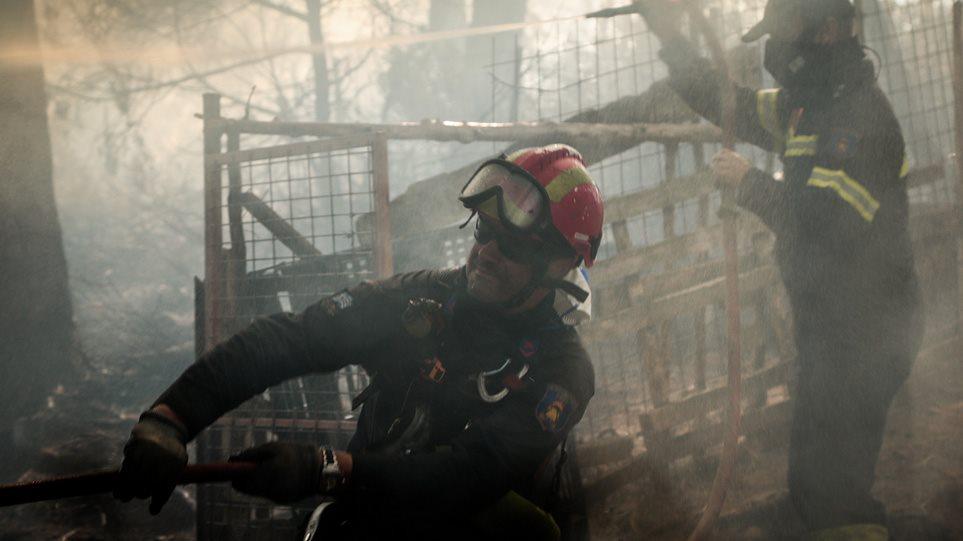Φωτιά στην Εύβοια: Ενδείξεις για εμπρησμό ερευνά η Πυροσβεστική! (BINTEO)