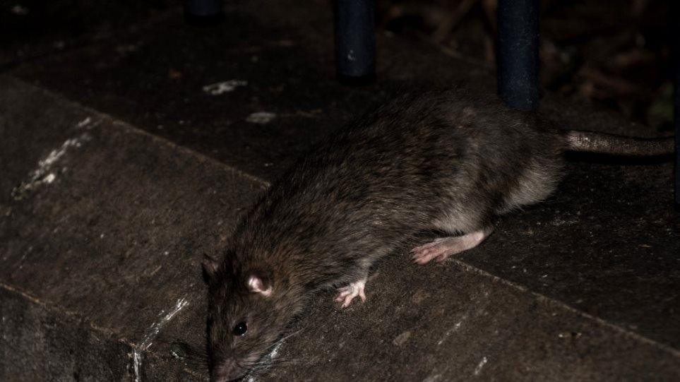 Νέα απειλή: Ο θανατηφόρος ιός των ζώων «Τσαπάρε» μεταδίδεται από άνθρωπο σε άνθρωπο!