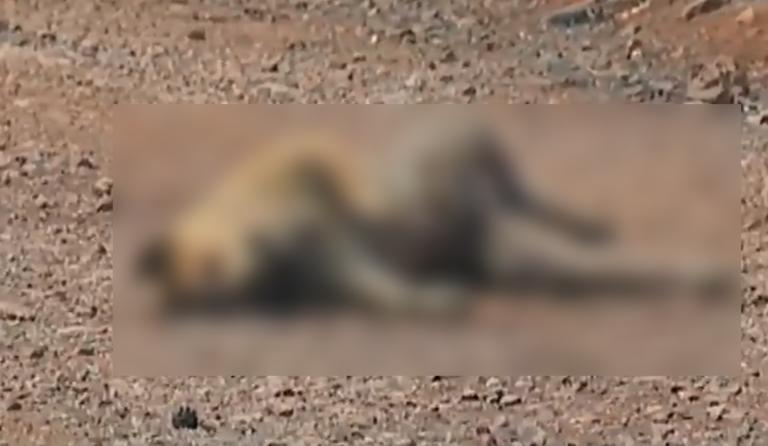 Φωτιά Εύβοια: Εικόνες σοκ στα καμένα! Νεκρά ζώα και μαύρο παντού! (BINTEO) – ΠΡΟΣΟΧΗ ΣΚΛΗΡΕΣ ΕΙΚΟΝΕΣ