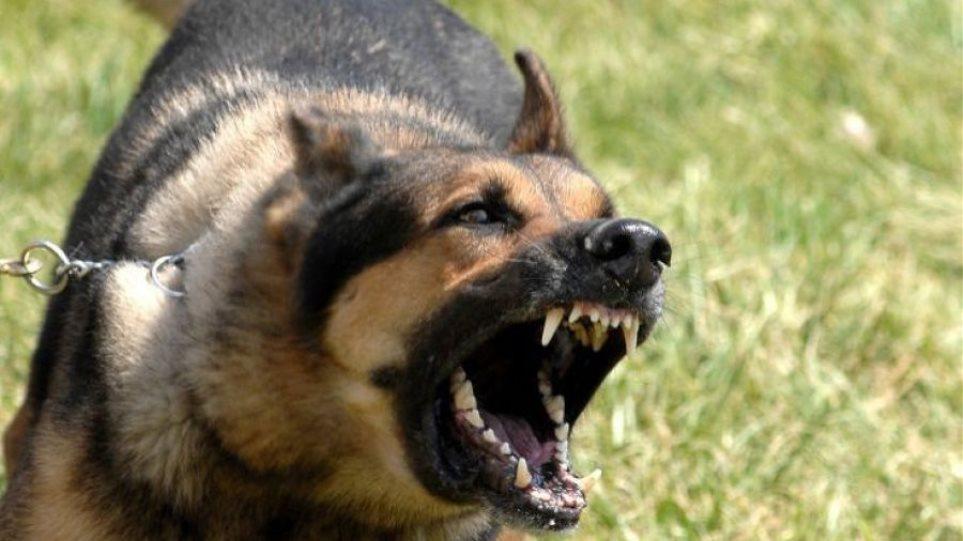 Θεσσαλονίκη: Επίθεση από αγέλη σκύλων δέχτηκε 17χρονη – Τη δάγκωσαν 58 φορές!
