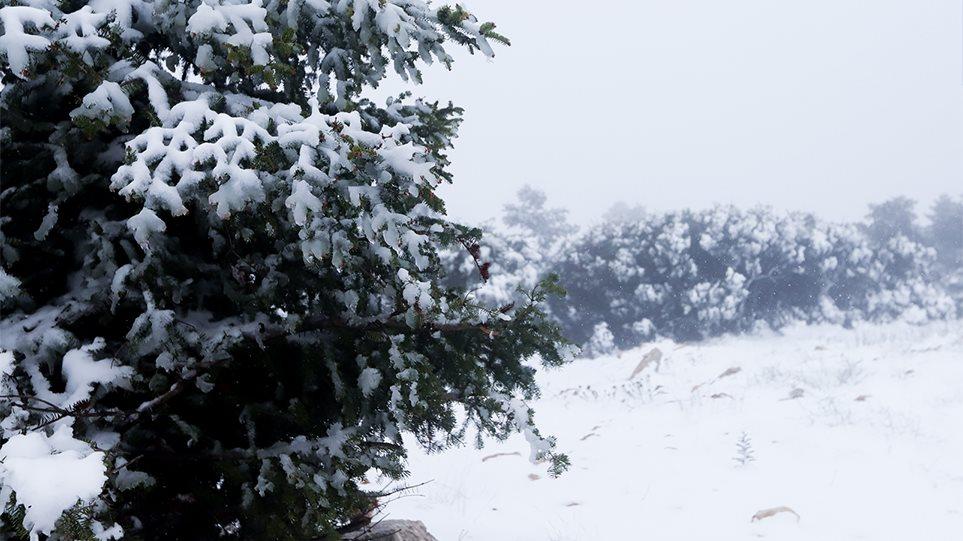 Καιρός – Καλλιάνος: Ο χιονιάς θα έρθει το βράδυ της Κυριακής!